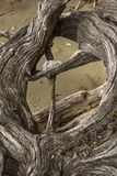 Coto da madeira lançada à costa com uma cruz em uma abertura, lago flagstaff fotos de stock royalty free