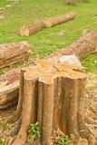 Coto de árvore Imagens de Stock