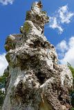 Coto de árvore Imagem de Stock Royalty Free