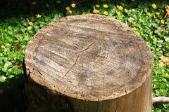 Coto de árvore Fotografia de Stock