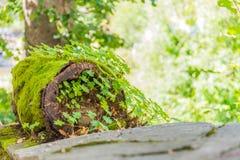 Coto de árvore caído foto de stock