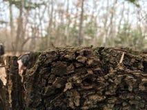 Coto de árvore, casca, close up Natureza do outono Imagem de Stock
