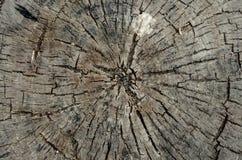Coto de árvore com quebras foto de stock