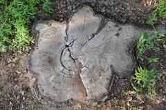 Coto de árvore de Arial Imagem de Stock