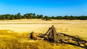 Coto de árvore inoperante no mini deserto de Beekhuizerzand imagens de stock