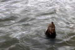 Coto de árvore na água Foto de Stock