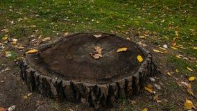 Coto de árvore na floresta foto de stock