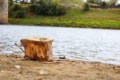 Coto de árvore no banco de rio arenoso foto de stock royalty free