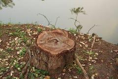 Coto de árvore no jardim Imagem de Stock