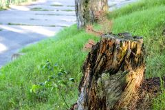 Coto de árvore podre velho com musgo fotografia de stock