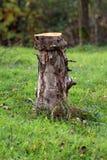 Coto de árvore reduzido usado agora como a decoração do jardim e sentando-se cercado com grama verde sem cortes e as flores peque imagem de stock