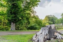 Coto de caza de los bosques en el pueblo del mezirici de Velke en Fotografía de archivo libre de regalías