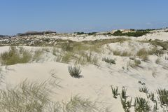Donana National Park in Andalusia, Spain stock photos
