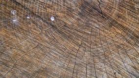 Coto de madeira fotografia de stock