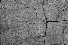 Coto de madeira com o close up dos círculos e das quebras dos anos preto e branco Macro rachado da madeira serrada Superfície de  foto de stock