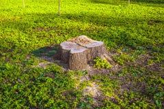 Coto de madeira na grama verde fora Imagens de Stock Royalty Free