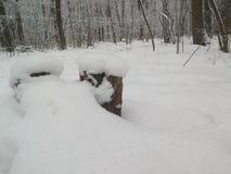 Coto dois nas madeiras, cobertas com a neve Floresta congelada Fotografia de Stock