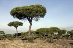 Coto Donona国家公园, 免版税图库摄影