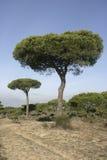 Coto Donona park narodowy, Zdjęcie Royalty Free