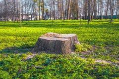 Coto fresco na grama verde fora Fotos de Stock