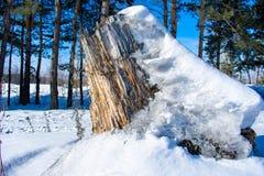 Coto grande na neve fotografia de stock royalty free