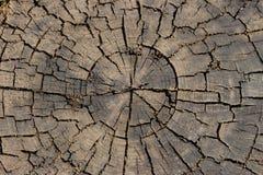 Coto marrom de madeira com o close up dos círculos e das quebras dos anos Macro rachado da madeira serrada Superfície de madeira  imagens de stock