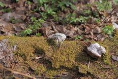 Coto na floresta coberto de vegetação com o musgo imagem de stock