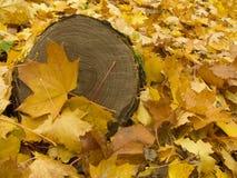 Coto na folha amarela do outono Imagem de Stock