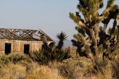 Coto nacional del Mojave Imágenes de archivo libres de regalías