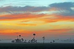 Coto nacional grande de Cypress, la Florida en el amanecer imagen de archivo libre de regalías