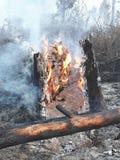 Coto no fogo Imagens de Stock