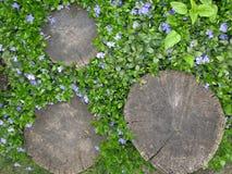 Coto no jardim entre flores azuis delicadas Fotos de Stock Royalty Free