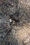 Coto velho, textura, sumário, de madeira Fotografia de Stock Royalty Free