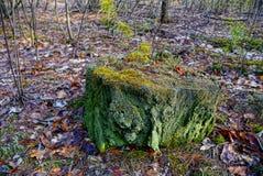 Coto verde velho no musgo na floresta do outono imagem de stock