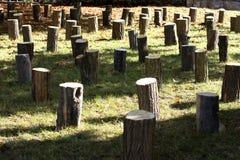 Cotoes de árvore Fotos de Stock Royalty Free