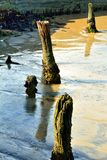 Cotoes de árvore Imagens de Stock Royalty Free