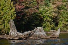 Cotoes no parque do Algonquin do lago canoe no outono adiantado imagem de stock