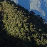 Cotojocha Reserve, Ecuador cloud forest Royalty Free Stock Photography
