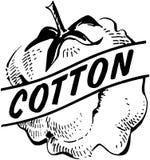 coton illustration stock