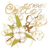 Coton de logo Photo stock