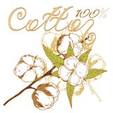 Coton de logo Photographie stock libre de droits