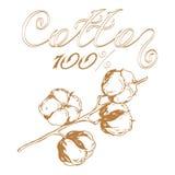 Coton de logo Photographie stock