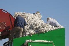 Coton et travailleurs Photos stock