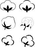 Coton (Gossypium). illustration de vecteur