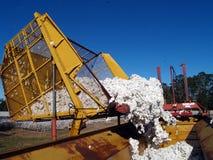 Cotone di dumping con errori della capsula Immagine Stock