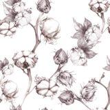 Cotone - piante del gambo con i baccelli del seme Reticolo senza giunte wallpaper Usi i materiali stampati, i segni, i manifesti, Fotografie Stock