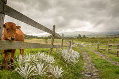 Cotopaxi National Park Stock Photos