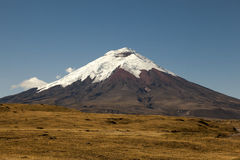Cotopaxi and paramo royalty free stock image