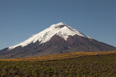Cotopaxi and potato crops Royalty Free Stock Images
