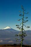 Cotopaxi volcano, Ecuador. stock images